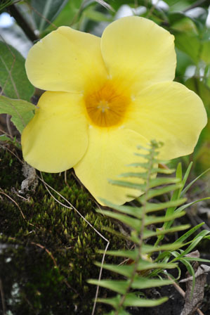 Visages et Fleurs de Bali